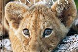 Baby Animals von Michael Poliza, erschienen bei teNeues