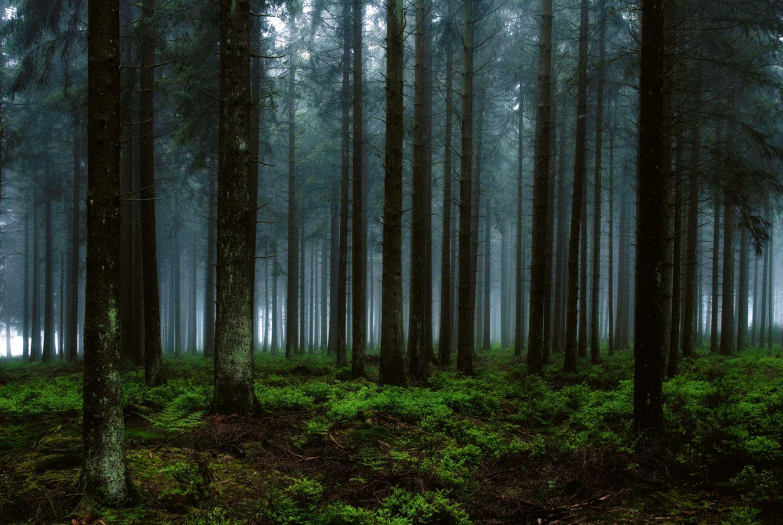 Waldstück im Lonlou-Venn