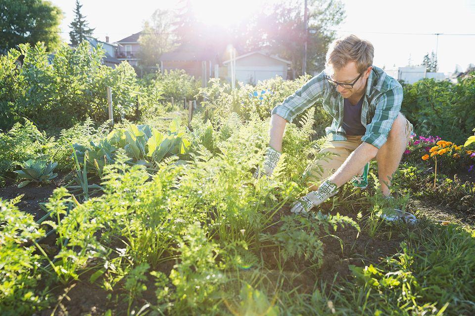 Mann arbeitet im Garten