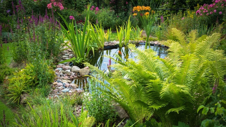 Garten Tipps Immer extremeres Wetter Was Hobby Gärtner jetzt ...
