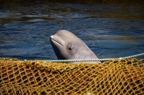 Walgefängnis, Russland