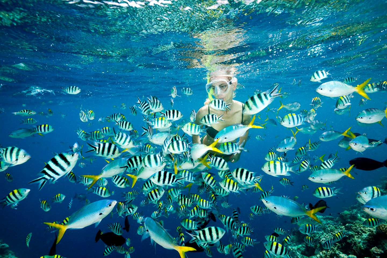 Schnorcheln, Palau
