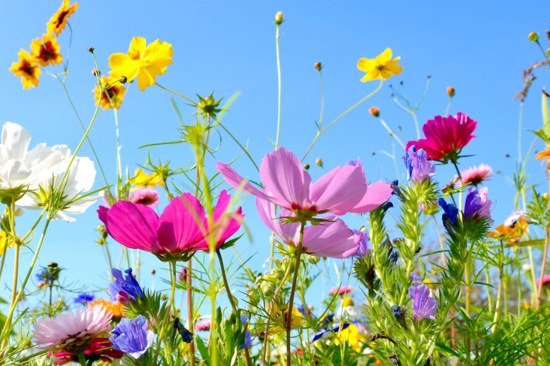 Frühling: Warum wir uns so über ihn freuen - [GEOLINO]