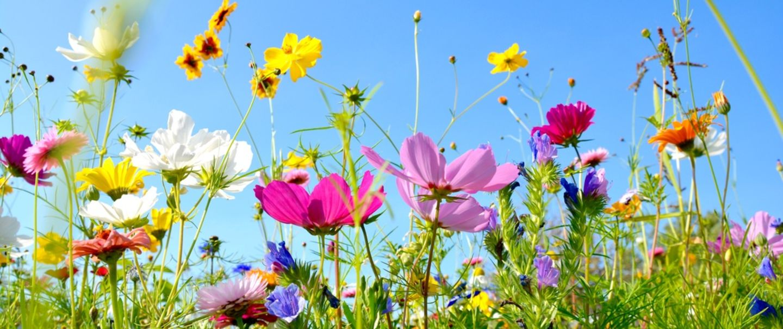 Frühling, Blumenwiese