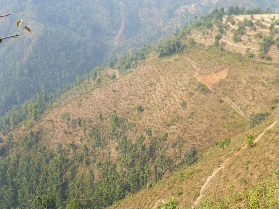 Der große Holzbedarf hinterlässt schwere Wunden in der Landschaft