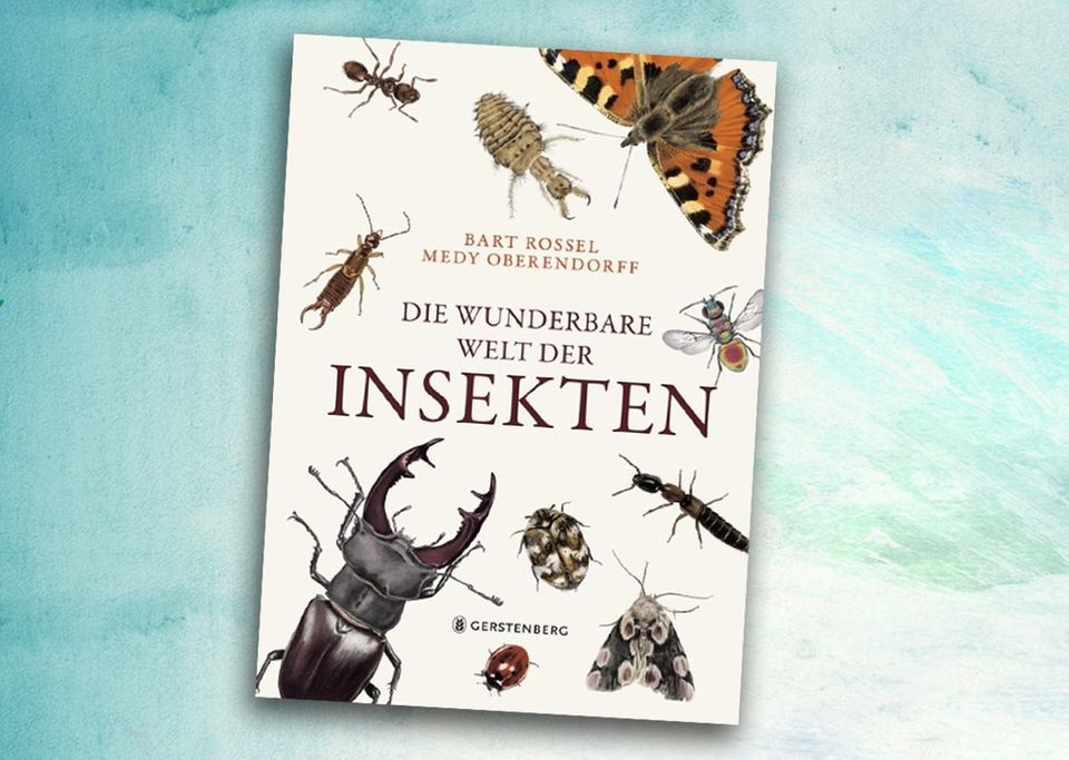 Wunderbare Welt der Insekten