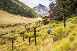 Mystisches Grasland im Hochland von Papua-Neuguinea