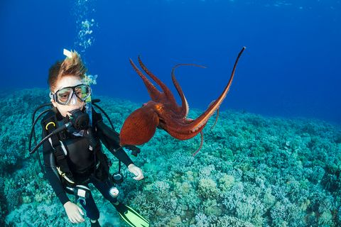 Junge betrachtet einen Oktopus