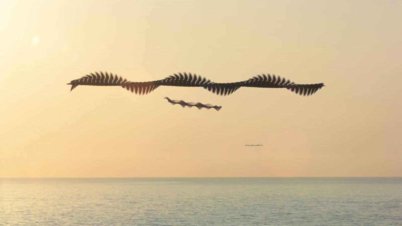 Xavi Bou - Ornitographies