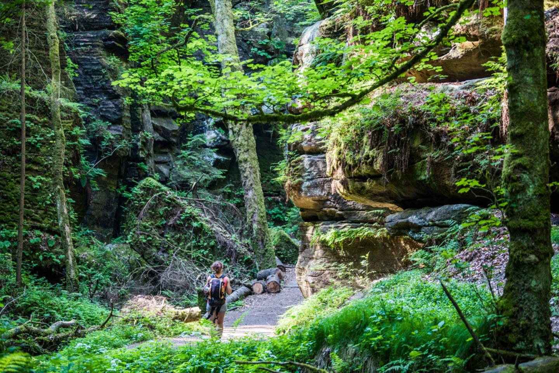 Wildnis erleben im Elbsandsteingebirge