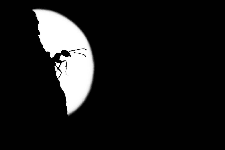 Antje Kreienbrink - Ameise einer Ameisenstrasse