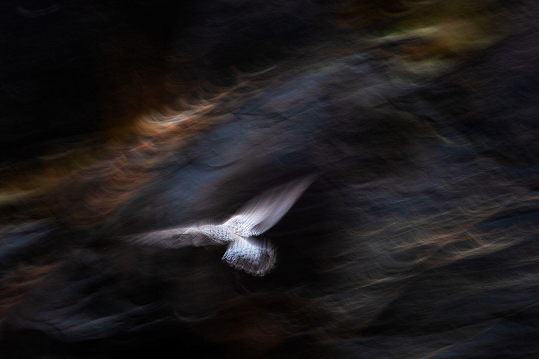 Jan van der Greef - Gull and Light