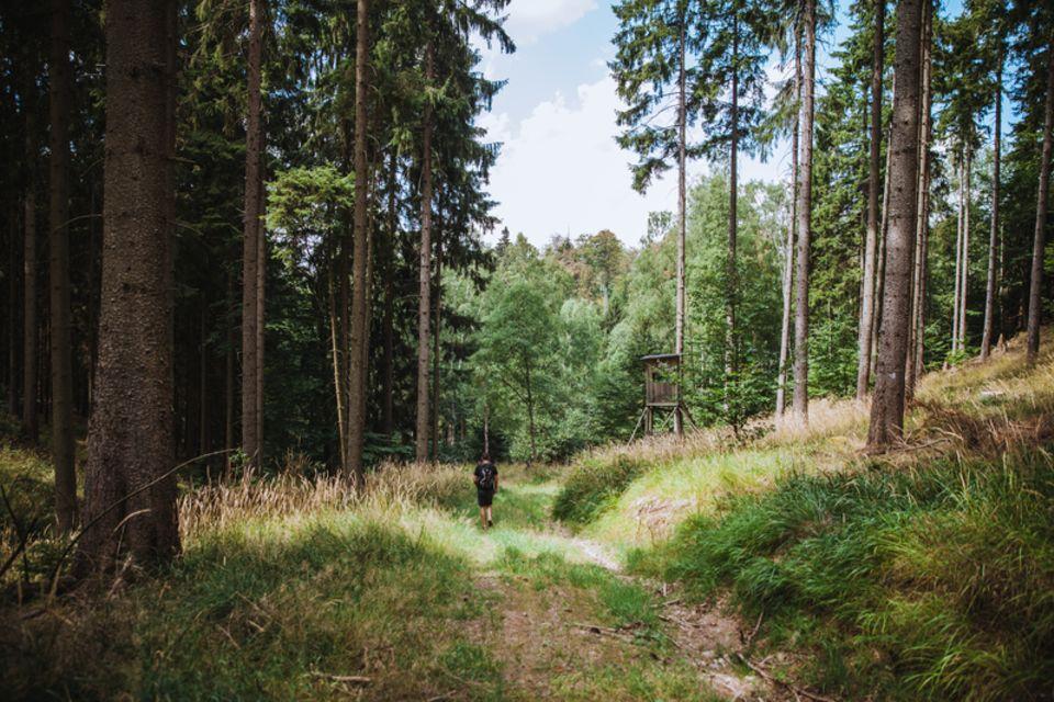 Im Wald wandern