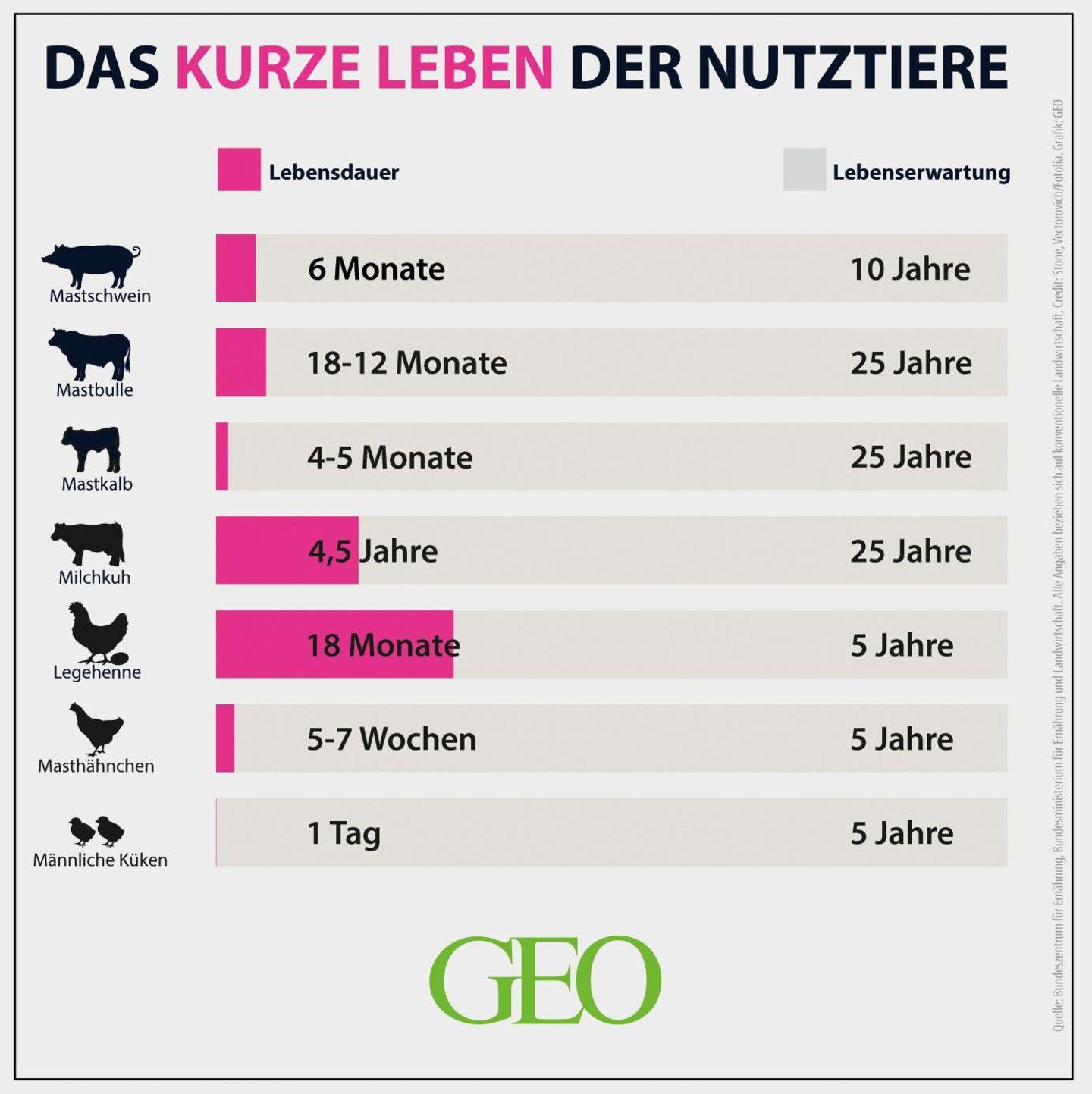 Grafik: Lebensdauer von Nutztieren
