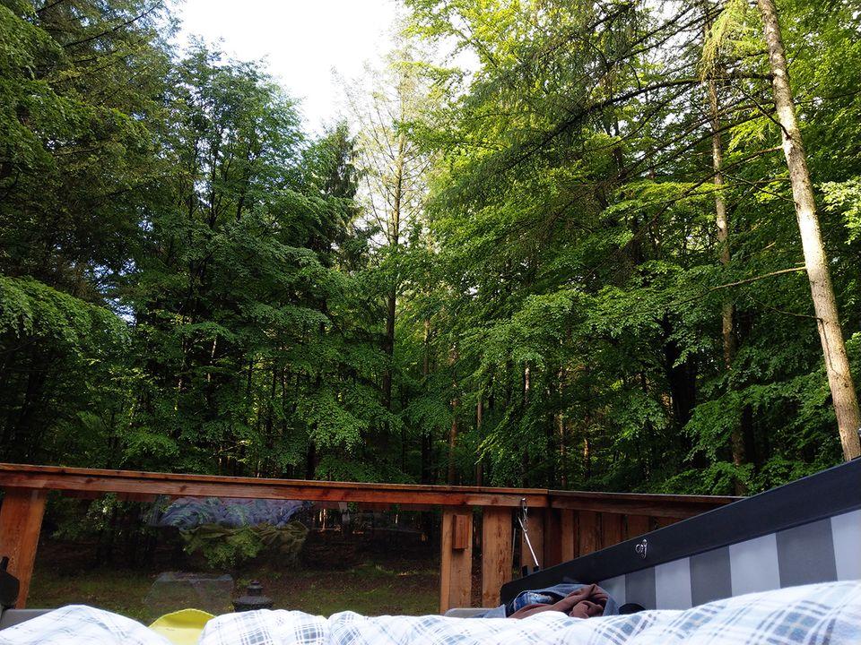Blick aus dem Waldkorb