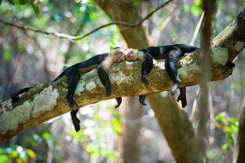 Corcovado National Park, Costa Rica