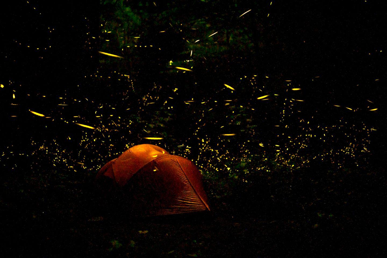Glühwürmchen, Great Smokey National Park