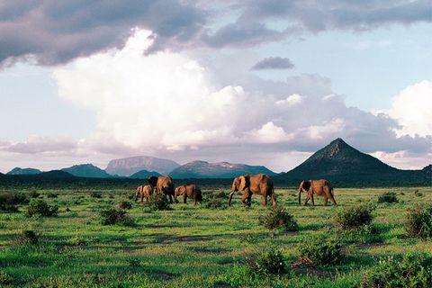 Samburu Nationalpark, Afrika