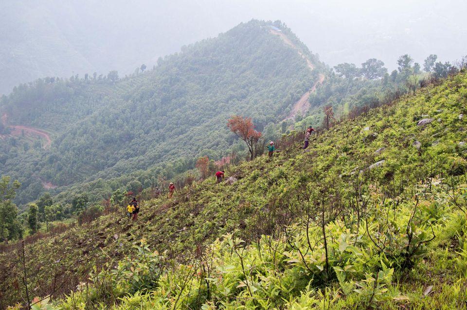 Während ihrer Pflanzarbeiten motiviert die Freiwilligen der Anblick um die Schule von Sunaulo Bazaar, der ab 2013 mit großem Erfolg aufgeforstet worden ist
