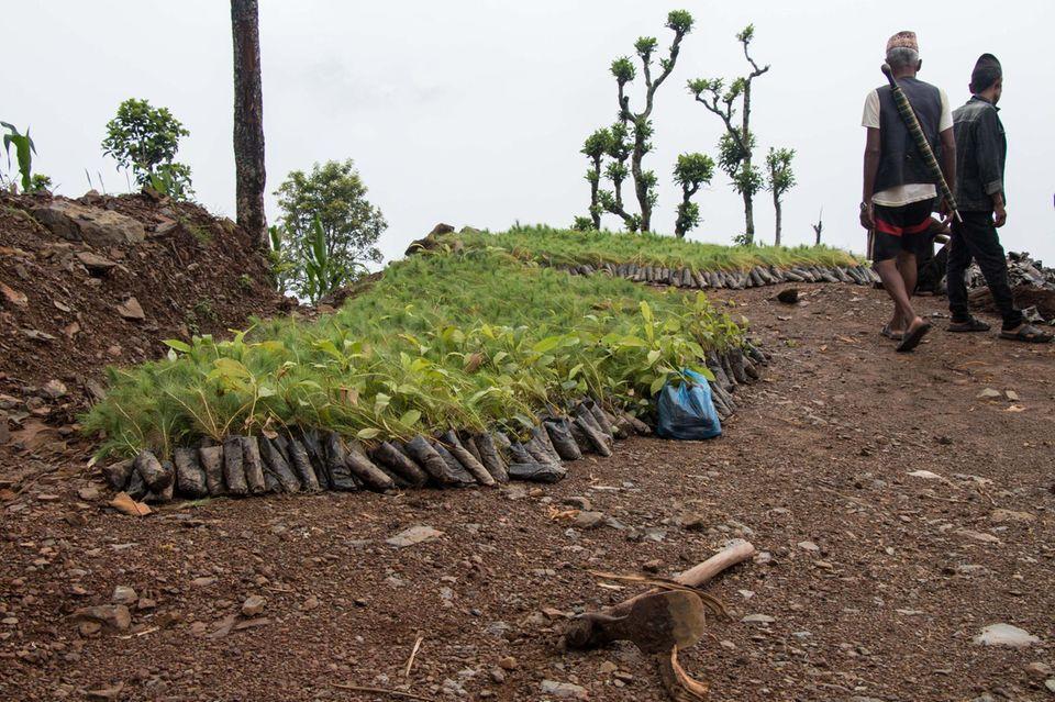 Schon Wochen vor Monsunbeginn stehen die Setzlinge am Aufforstungsort Sansari Danda zur Pflanzung bereit