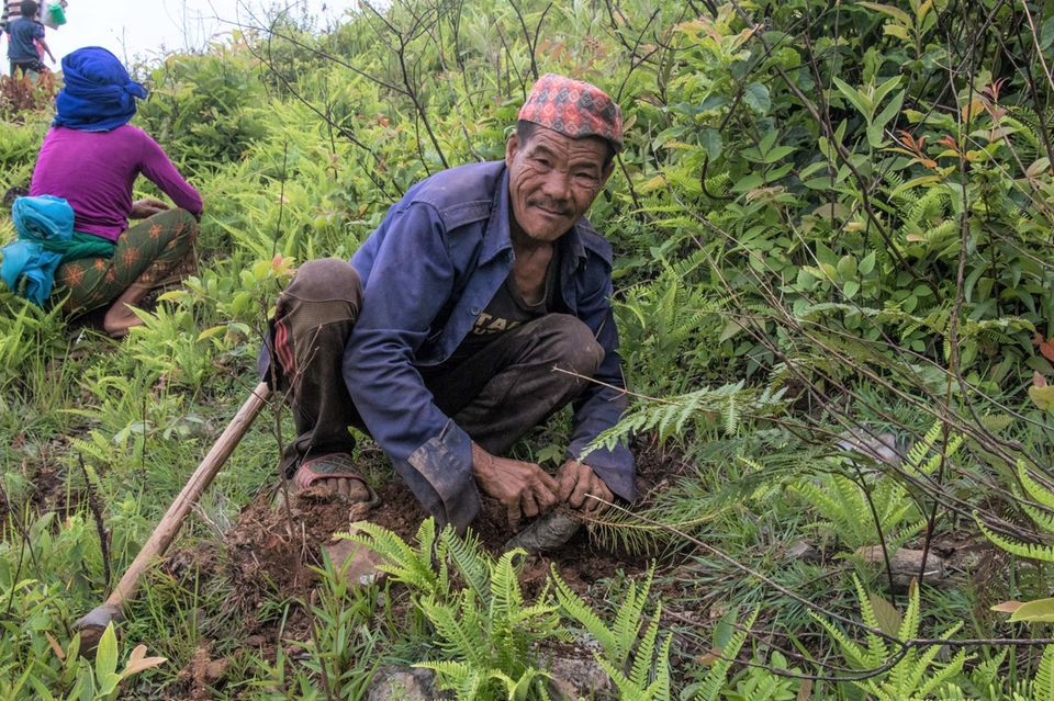 Anfang Juli stehen die Pflanzlöcher bereit, der Boden ist gut durchfeuchtet, jetzt kommen die Setzlinge in die Erde
