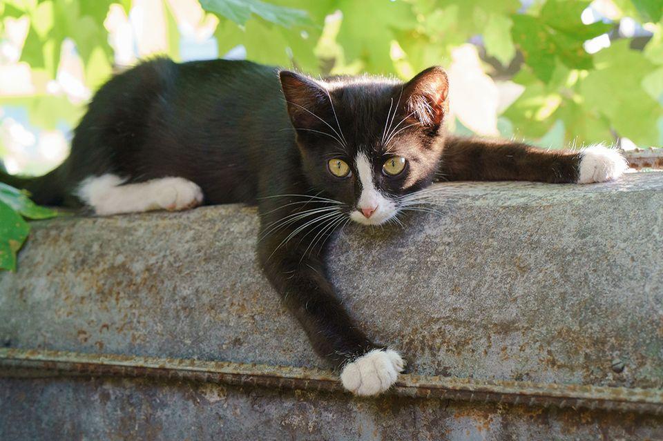 Katze im Schatten