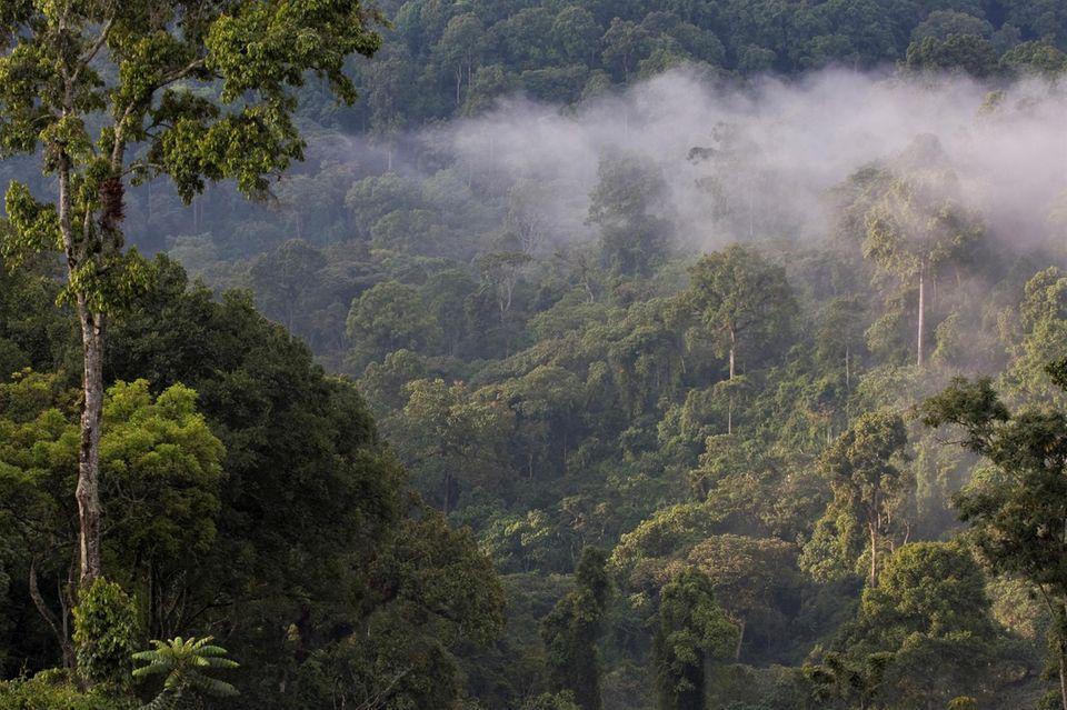 Äthiopien: Der üppige dichte Bergnebelwald von Kaffa ist in Boginda besonders gut erhalten