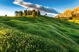 Blumenwiese, Südtirol