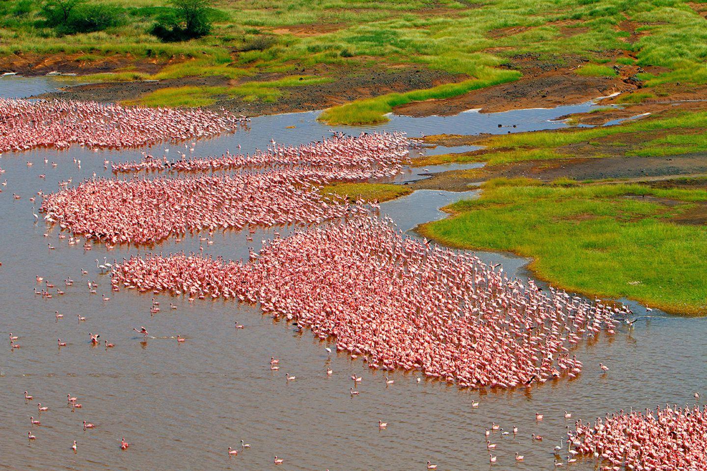 Flamingos Bogoria