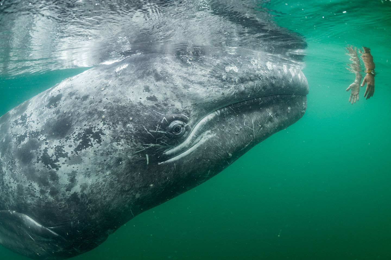 Thomas P Peschak / Wildlife Photographer of the Year