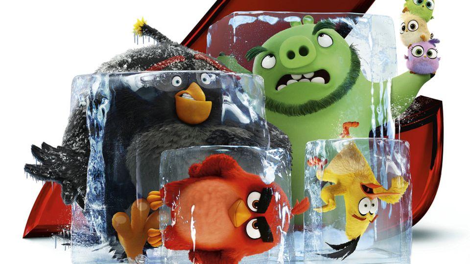 """Angry Birds 2: Der Film: Der """"Krieg der Streiche"""" geht in die nächste Runde"""
