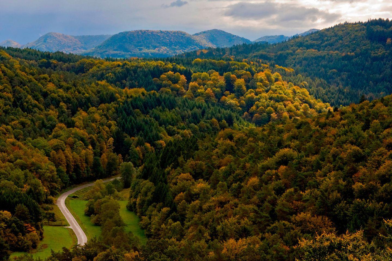 Pfälzerwald (Rheinland-Pfalz)