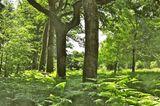 Forstenrieder Park (Bayern)
