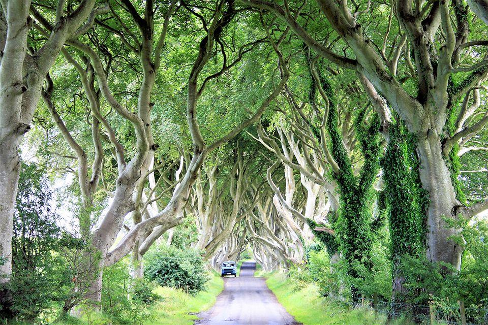 Allee in Nordirland