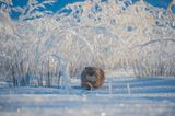 © Valeriy Maleev - Wildlife Photographer of the Year