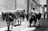 Wie seit Jahrhunderten schleppen Esel und Maultiere die Lasten durch die schmalen Straßen der Altstadt