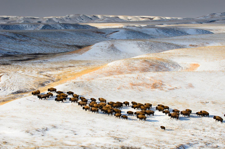 GEO Jahresrückblick: Die 50 beeindruckendsten Bilder des Jahres - Bild 33
