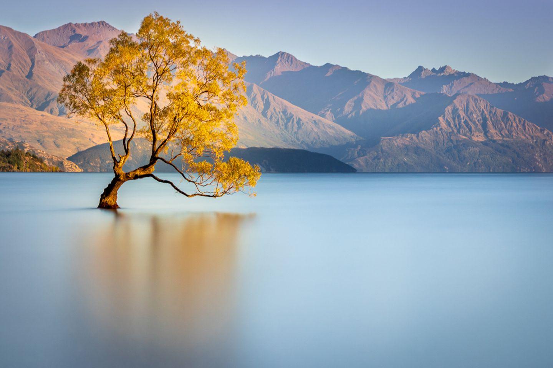 Baum bei Wanaka