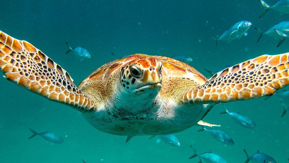 Barbados, Unterwasserwelt