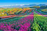 Blumenfelder, Japan