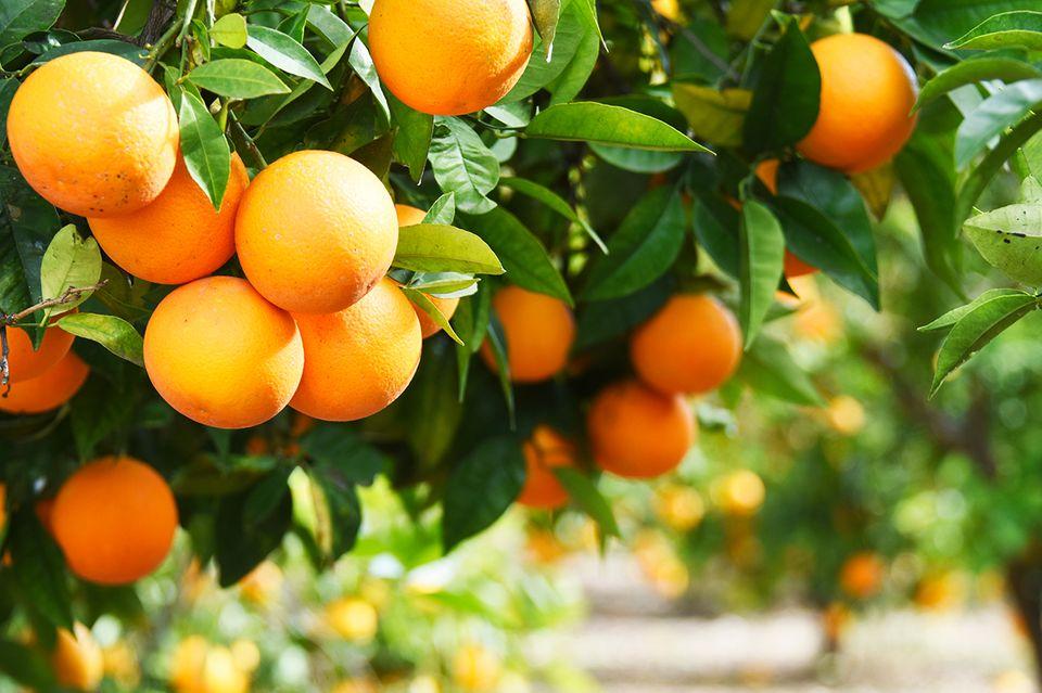 Orangen - Vitaminbomben