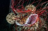 Ocean Art 2019 Underwater Photography Competition