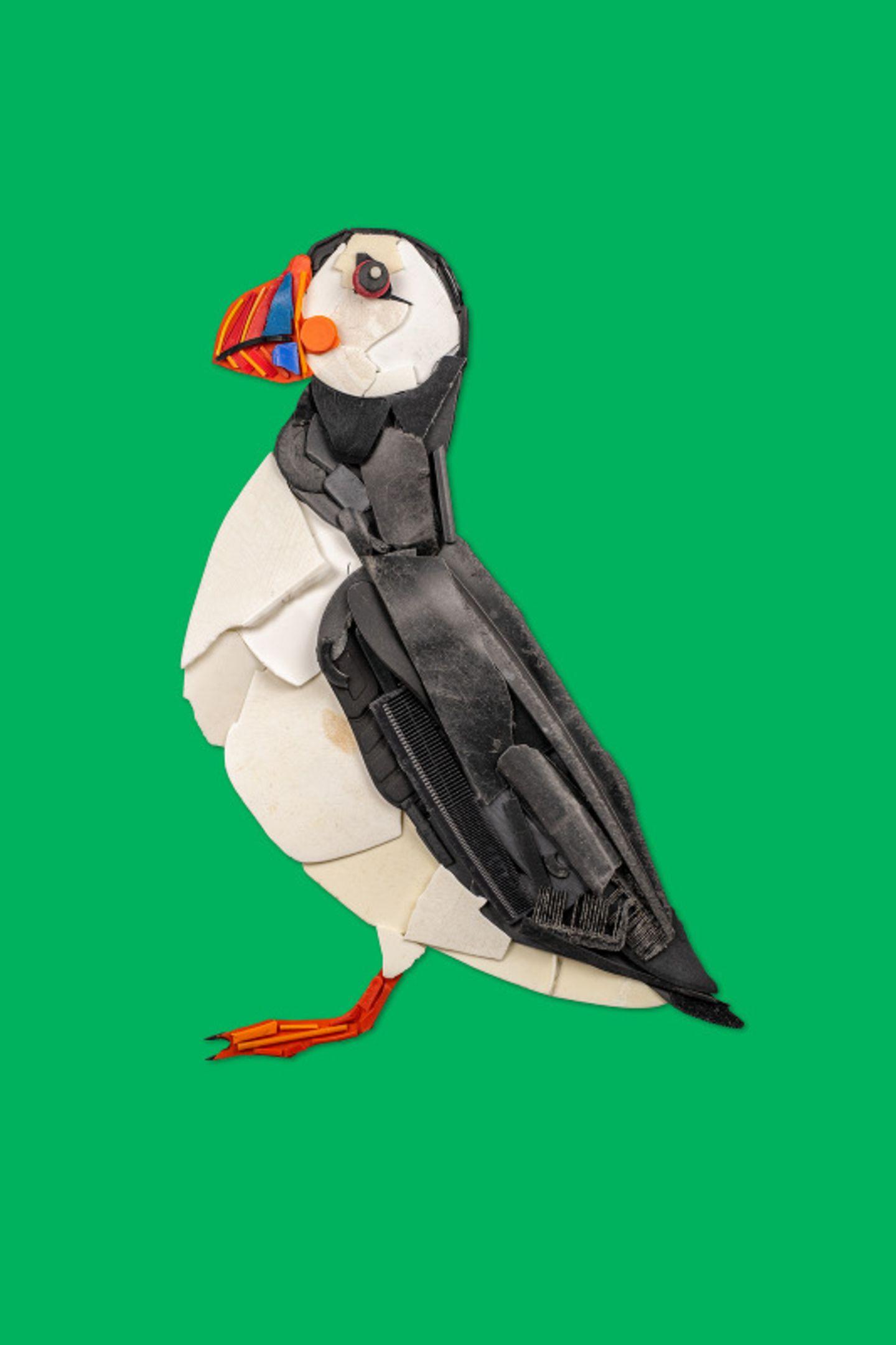 Der Papageientaucher