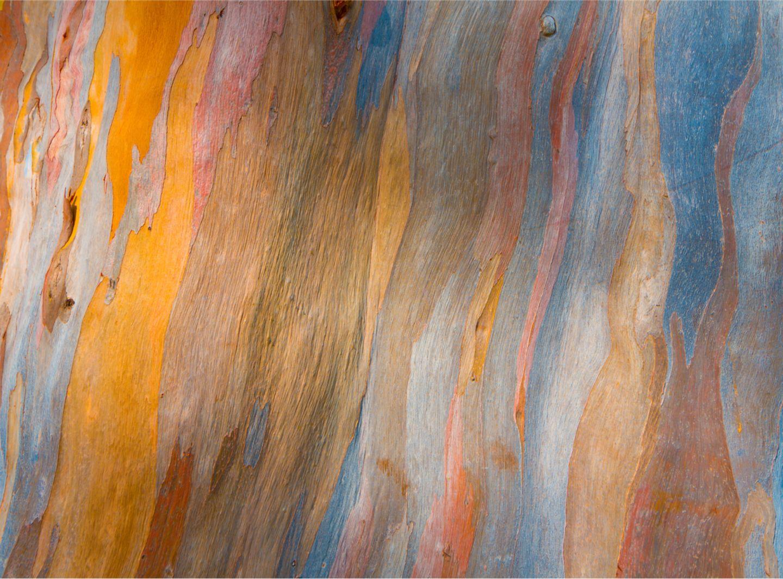 Das Geheimnis der Regenbogenbäume