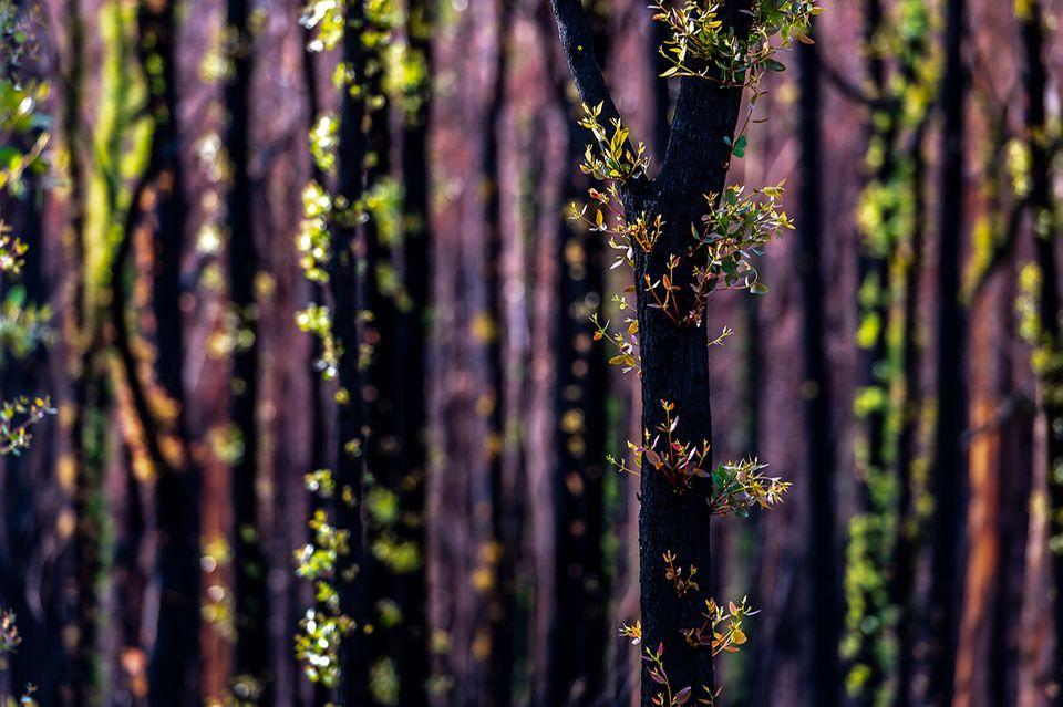 Nach den Waldbränden in Australien