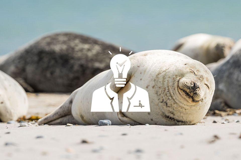 Podcast: Herr Faktencheck über Robben und Starwars