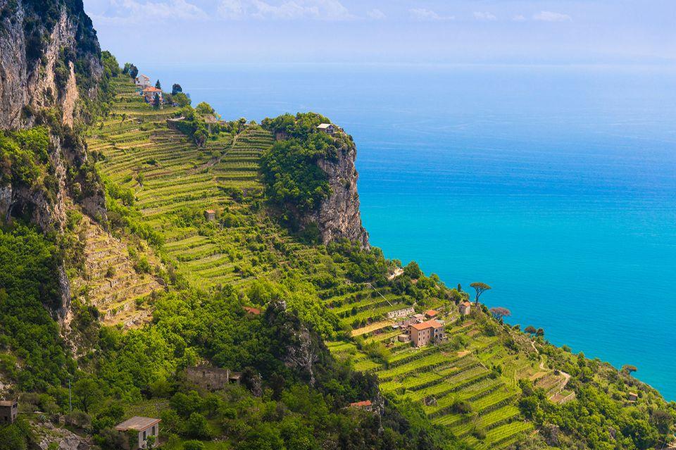 Zitronenfelder an der Amalfiküste
