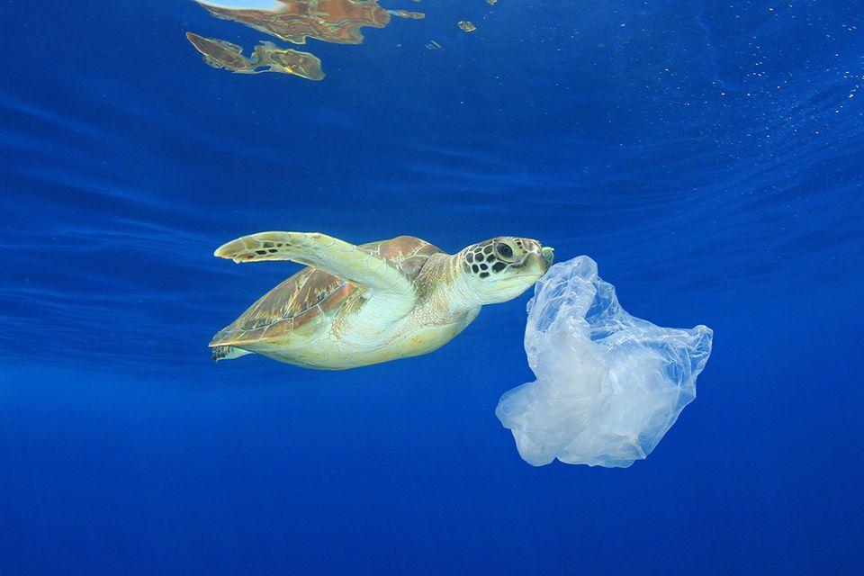 Meeresschildkröte frisst Plastik