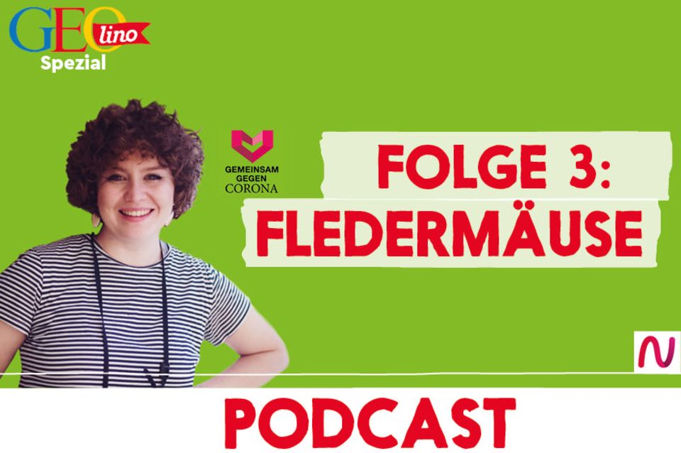 GEOlino-Podcast Folge 3: Gemeinsam gegen Corona: Fledermäuse