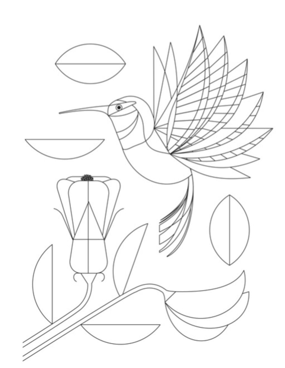 ein kolibri zum ausmalen  geolino